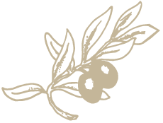 foglie oliva armato