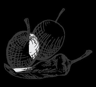 ingredienti ciacrinusa olive piccantine
